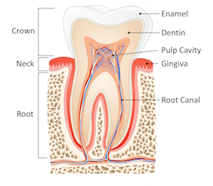 rootcanaltherapypic1