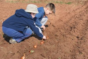 boys planting bulbs