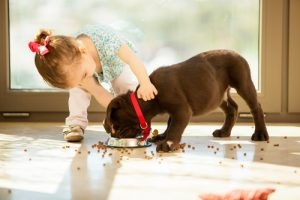 child feeding puppy
