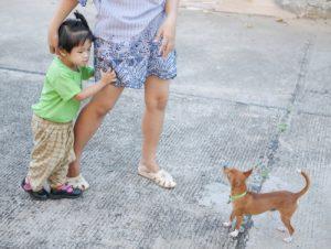 Child nervous around dog