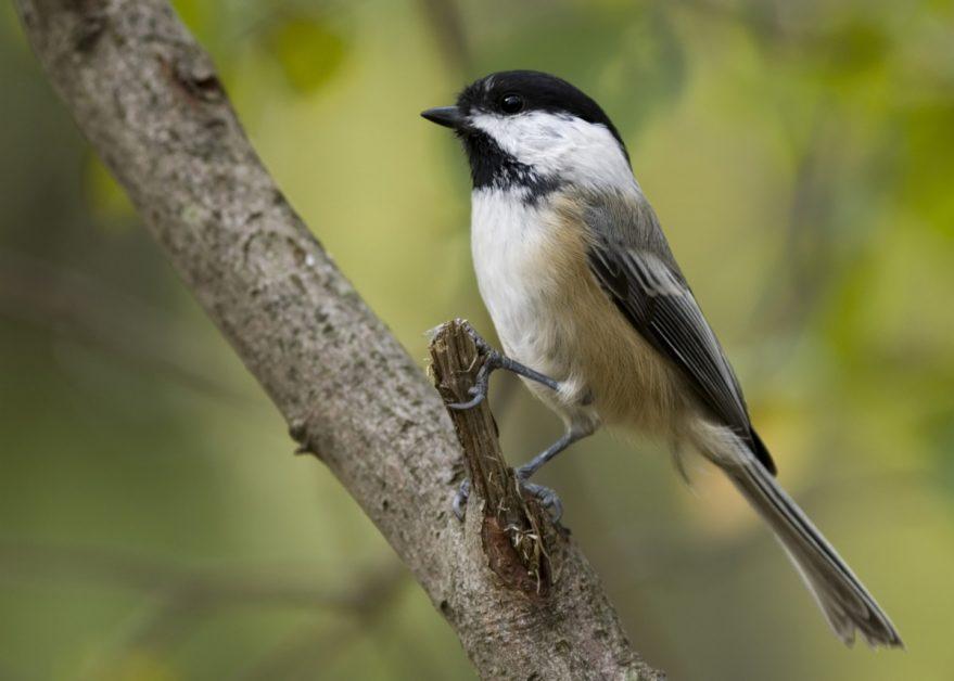 Bird Resting on a Branch