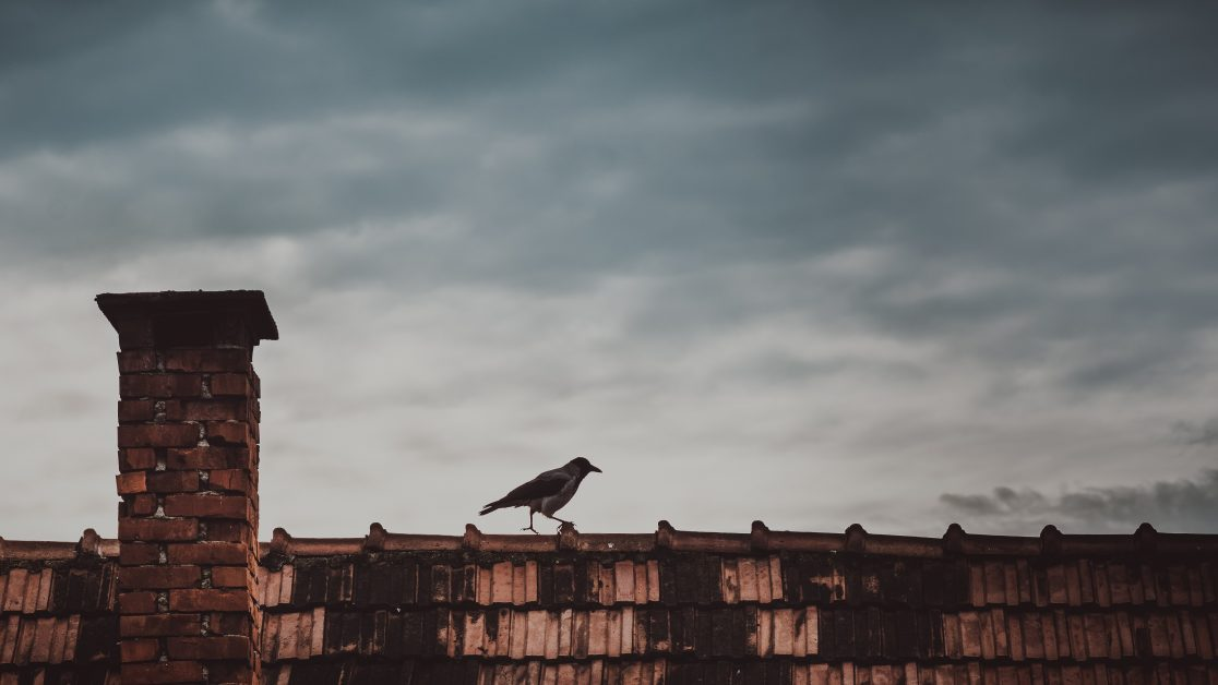 Raven on Rooftop Near a Chimney