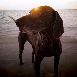 The best dog obedience training in Cincinnati.
