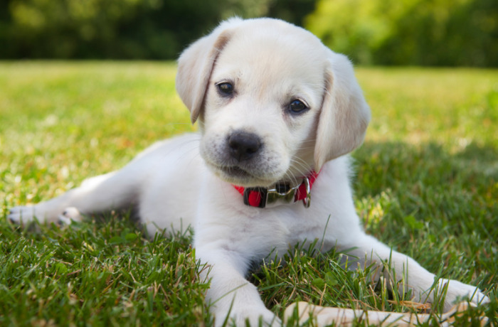 puppy-preschool-700x460