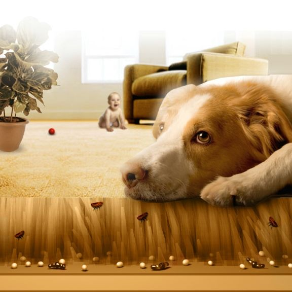 Carpet Cleaning: Tips To Help Control Fleas