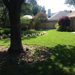 we are Jacksonville's choice for residential landscaping services