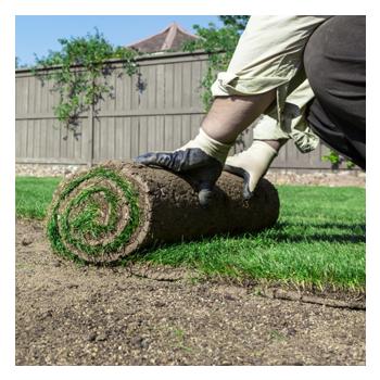 Residential Landscaping Jacksonville, FL: Sod Installation