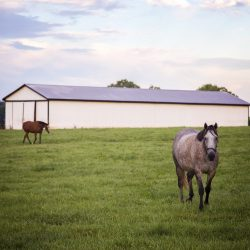 Retired horses grazing at Clover Hill Farms in Paris, KY