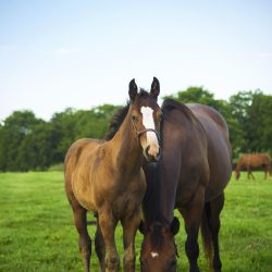 Horses enjoying the outdoors at Clover Hill Farms in KY