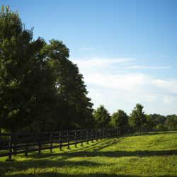 Kentucky horse farm at Clover Hill Farm
