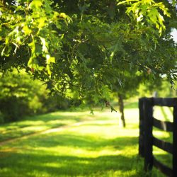 Clover Hill Farm horse ranch & boarding in KY