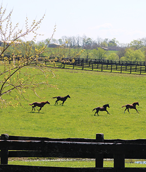 Clover Hill Farm Green Pastures For Boarded Horses