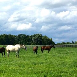 Horse farm for retired horses at Clover Hill Farm in Paris, KY