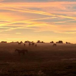 Clover Hill Farm at dusk with grazing horses