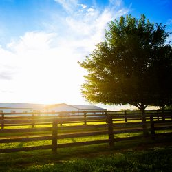 Horse Riding Lessons at Clover Hill Farm in Paris, KY