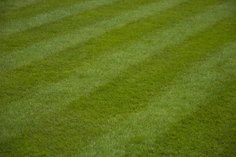 Mowing Service Fort Collins