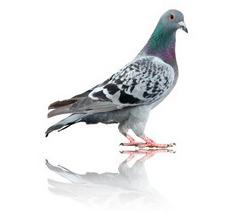 Bird Control Pic 2