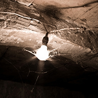 A cobweb-covered lightbulb