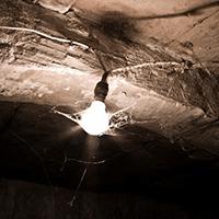 A cobweb-covered lightbulb