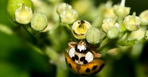 closeup of a lady beetle on the underside of a plant - Colorado Pest Management