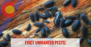 Evict unwanted pests with integrated pest control in Denver