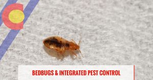 Bed bugs and integrated pest control in Denver