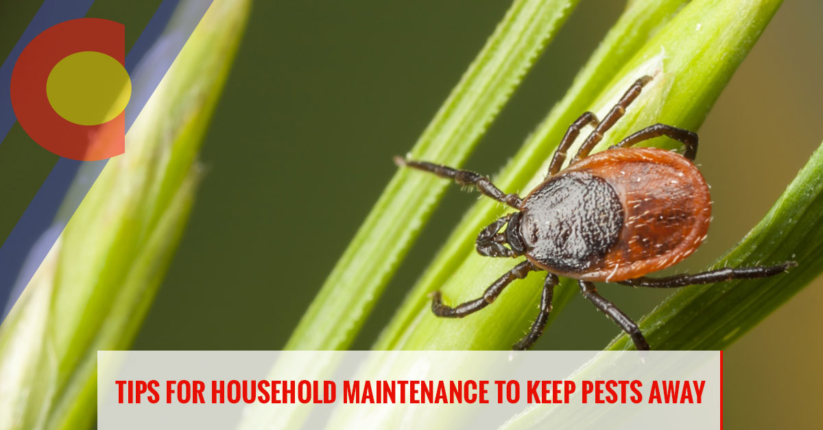 Tips for household maintenance to keep pests away