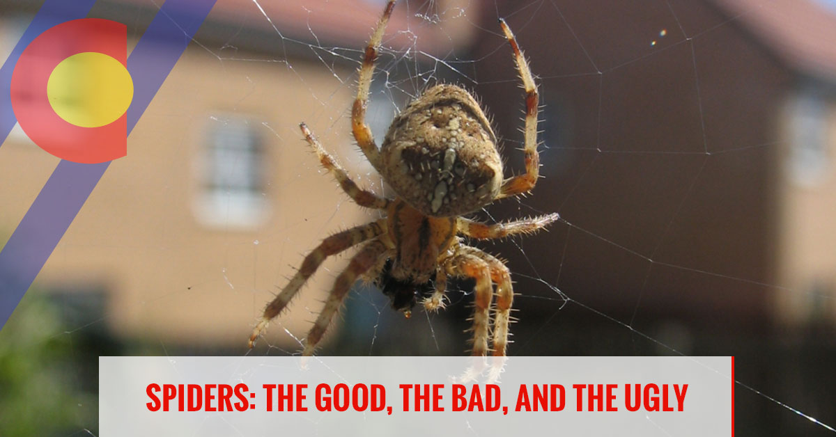 Spiders: the good, the bad, and the ugly