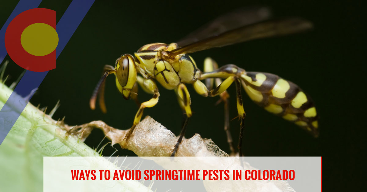 Ways to avoid springtime pests in Colorado