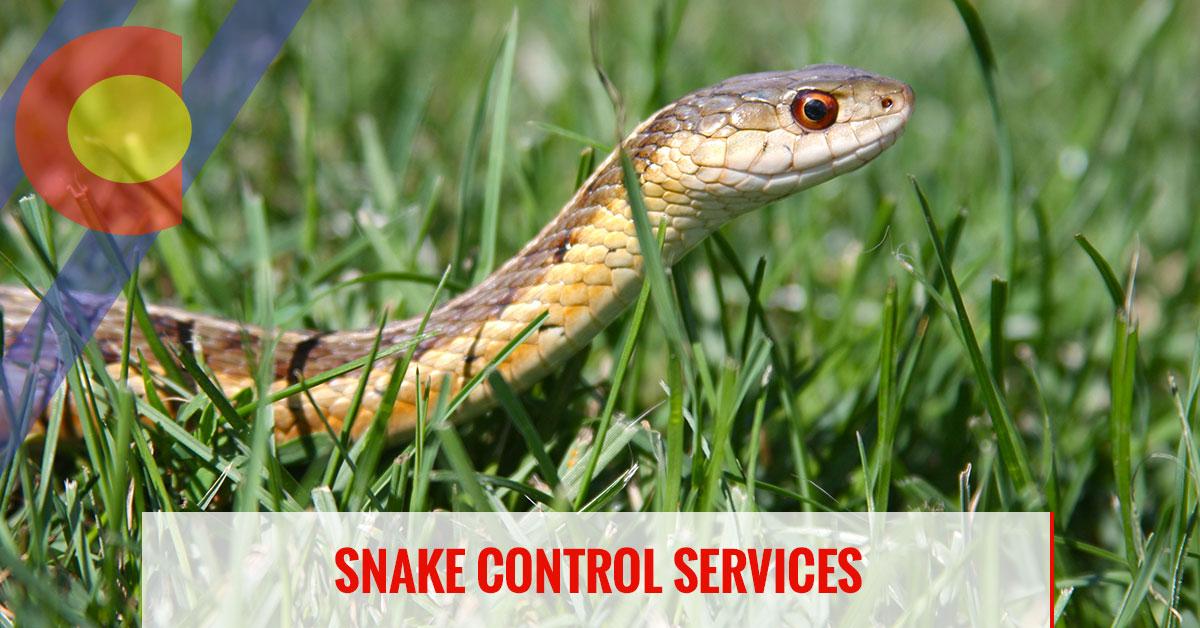 Snake control services in Denver