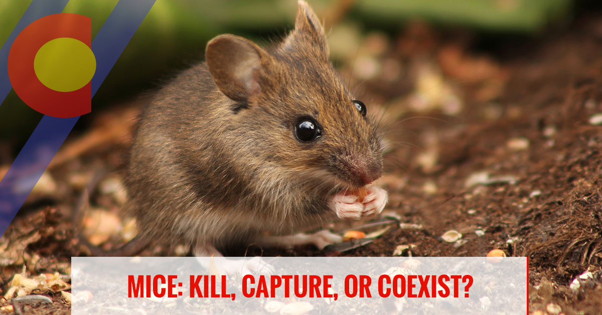 Mice: kill, capture, or coexist