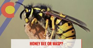 Learn the difference between honey bees and wasps