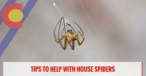 Tips to help with house spiders