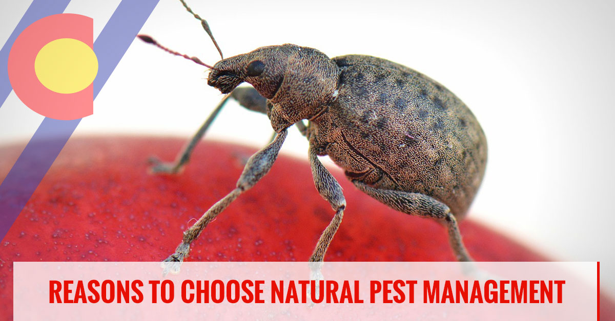 Reasons to choose natural pest management solutions