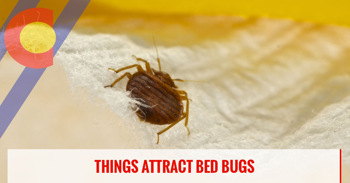 Things that attract bed bugs