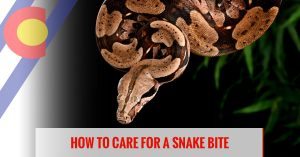How to care for a snake bite
