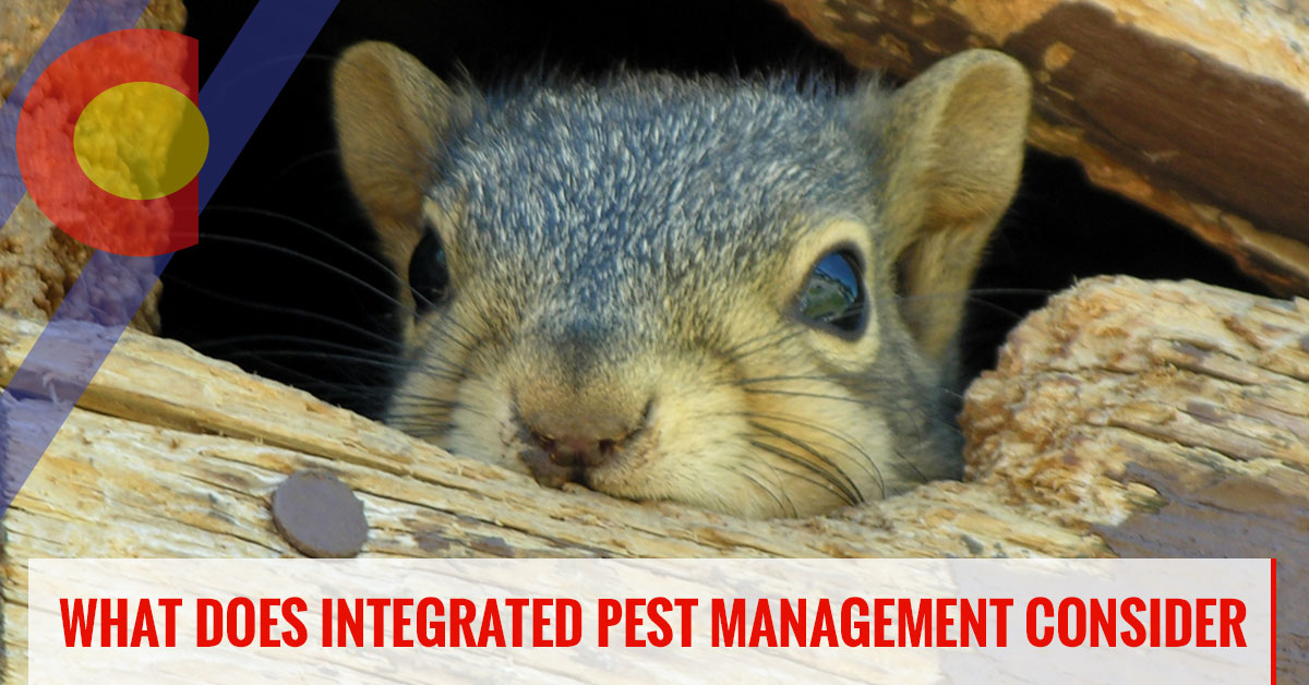 What does integrated pest management consider