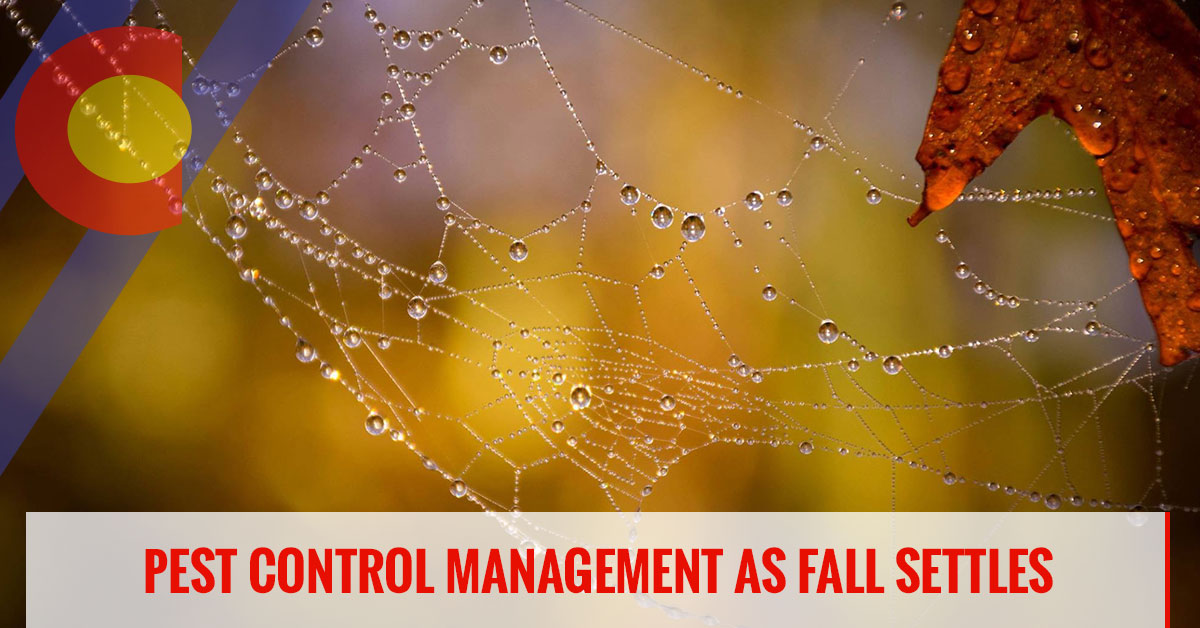 Fall pest management services you'll need