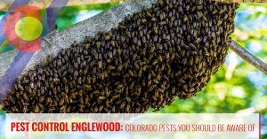 Bees and other Colorado pests you should be aware of