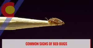 Common signs of bed bugs to watch out for