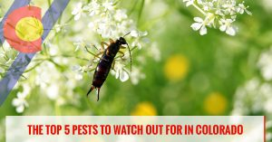 The top 5 pests to watch out for in Colorado