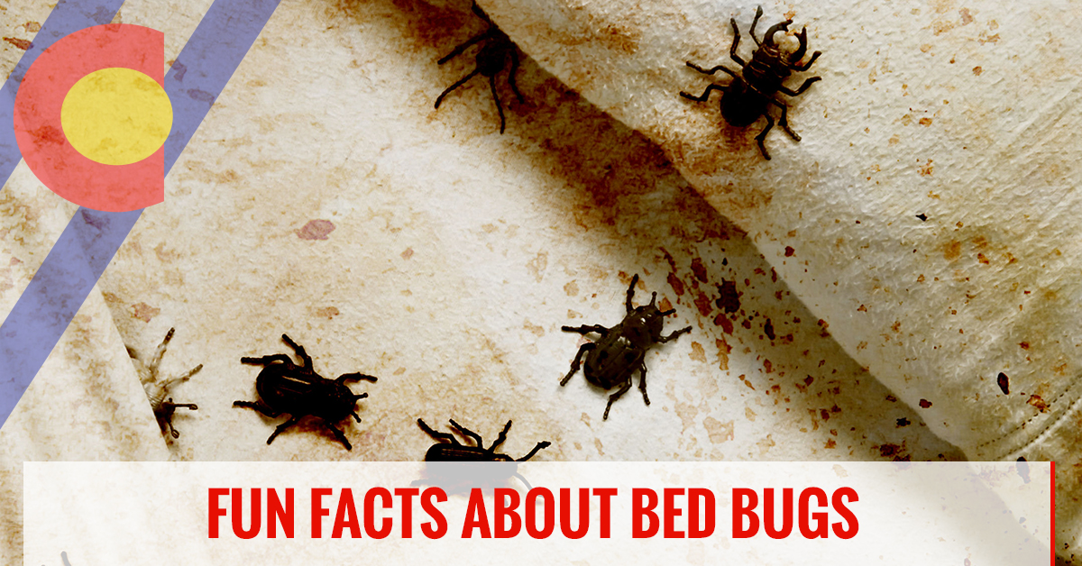 Facts about bed bugs