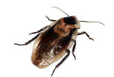 species-img-2