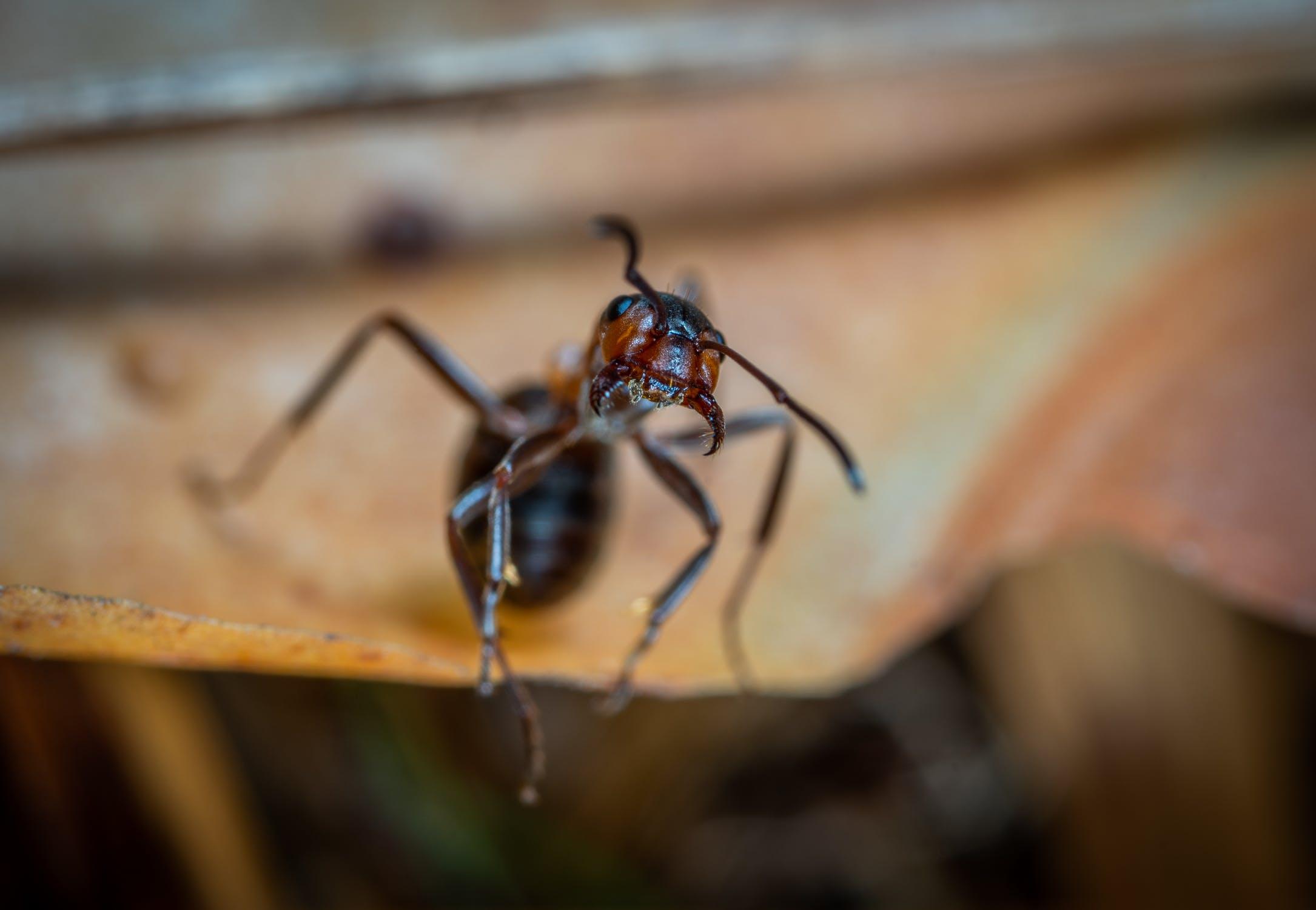 Pest Control Services In Denver Call Our Exterminators