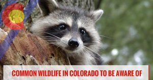 Common wildlife to watch out for in Colorado