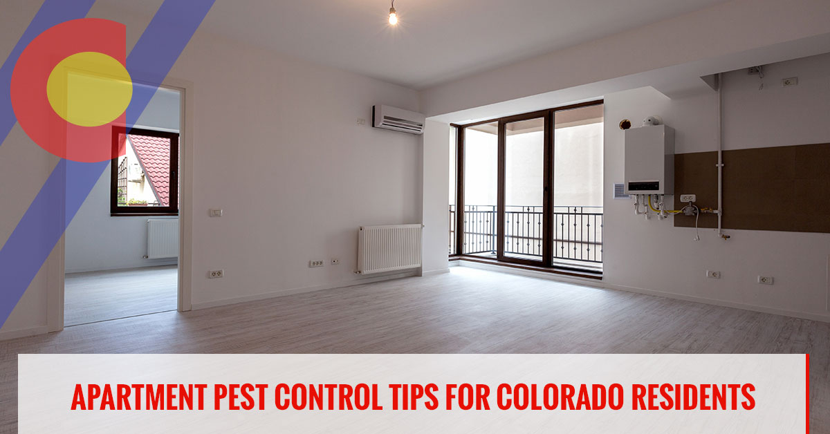 Pest control tips for those living in apartments in Colorado