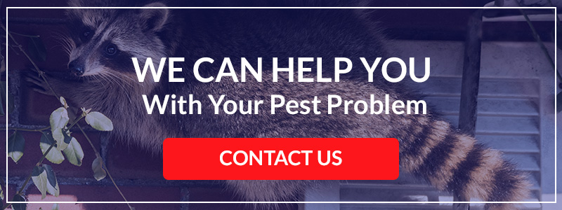 Our Denver pest control company can help with personalized pest management