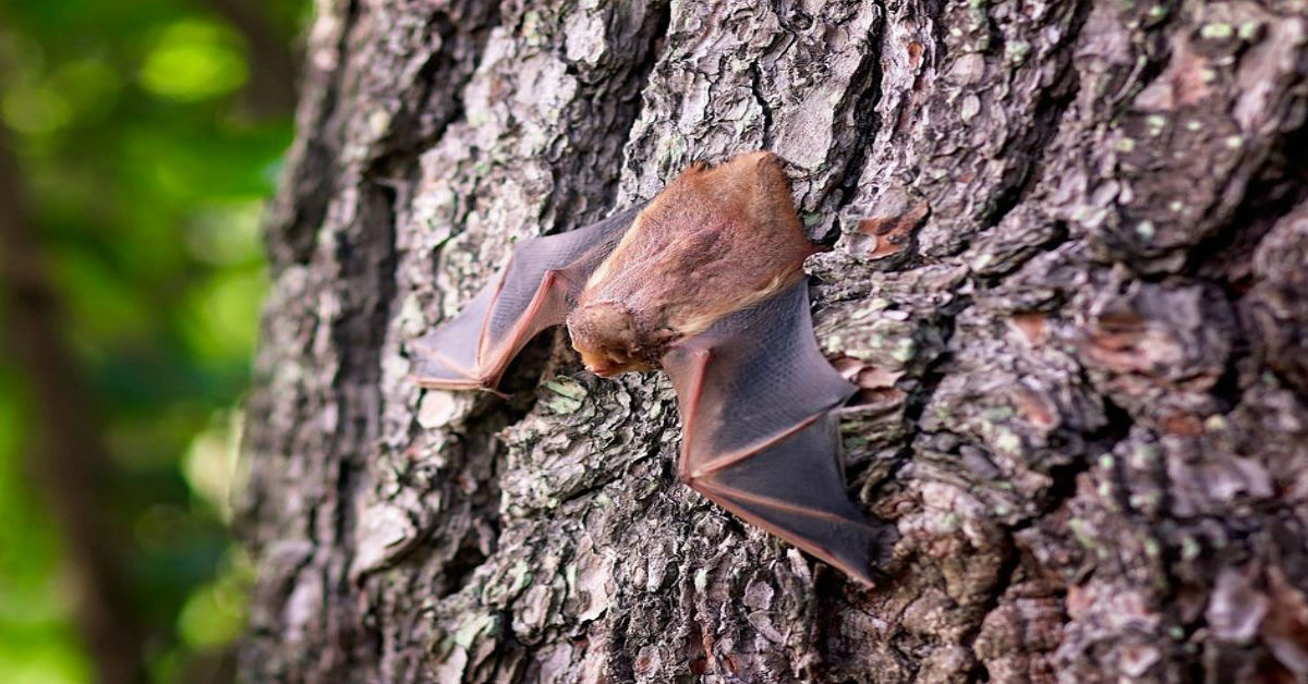 A brown bat resting on a tree's trunk