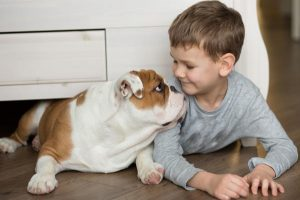 A little boy and an English bulldog play together on the floor