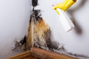 Mould Removal Coaldale AB
